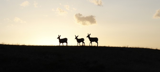 The Land of Living Skies: Cypress Hills